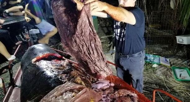 pétition stop plastique alimentaire : baleine