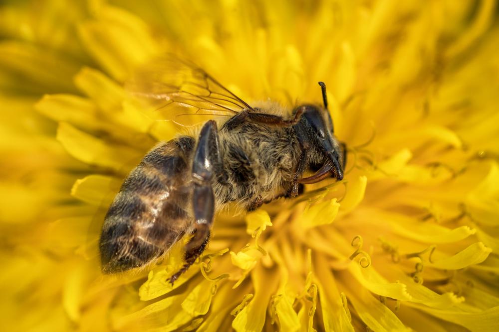 Génocide des insectes - Mobilisation Générale !!