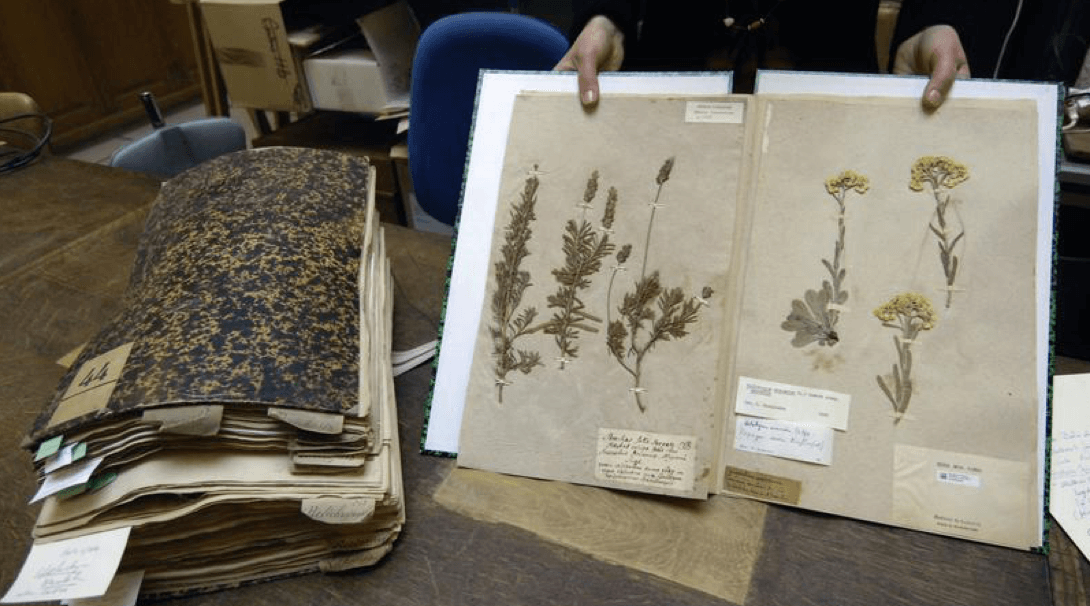 Un herbier ancien détruit volontairement par les Autorités australiennes