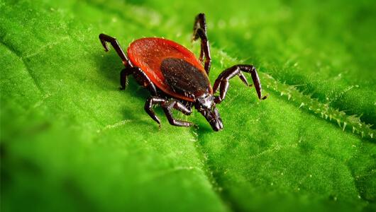 Maladie de Lyme - Stop à l'errance médicale !