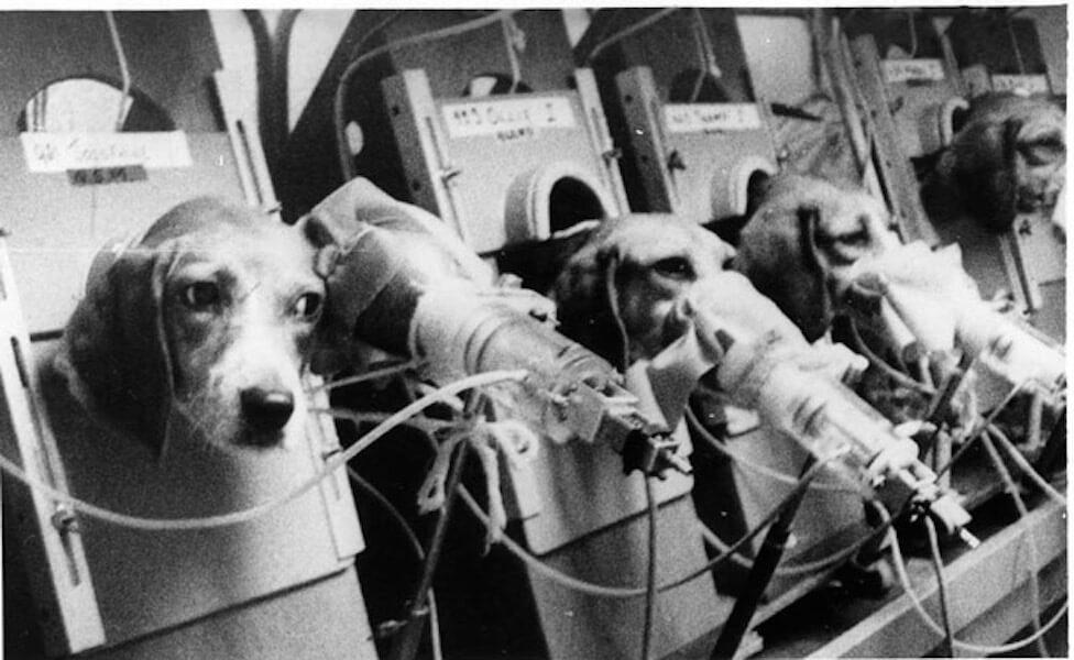 [pétition] STOP aux tests inhumains sur les animaux parl'industrie du tabac