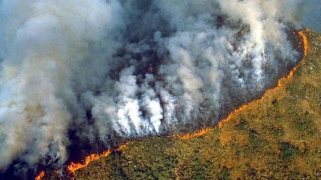 Stop à l'importation de la déforestation !