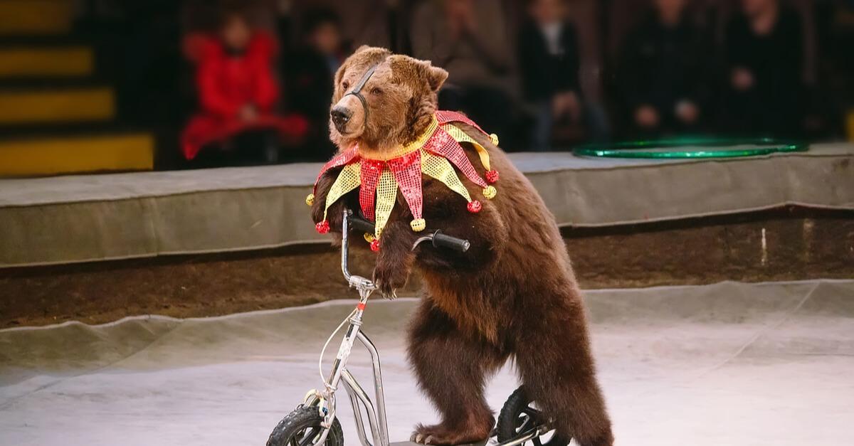Stop aux animaux sauvages dans les cirques !