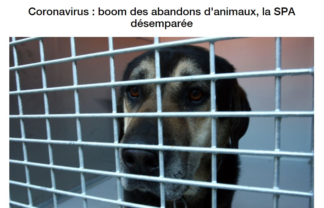 COVID-19 : STOP aux abandons massifs d'animaux