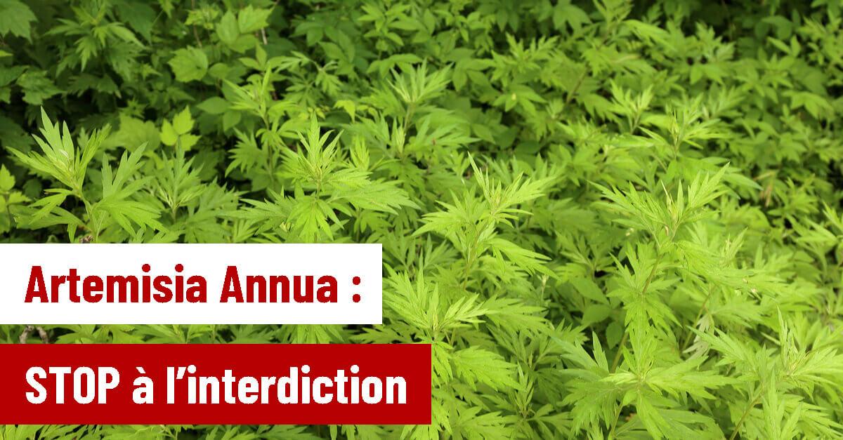 [Pétition - Covid19] Contre l'interdiction de l'Artemisia Annua en France
