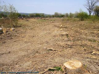 Stop à la destruction des forêts - créez des écosystèmes durables pour les générations d'avenir