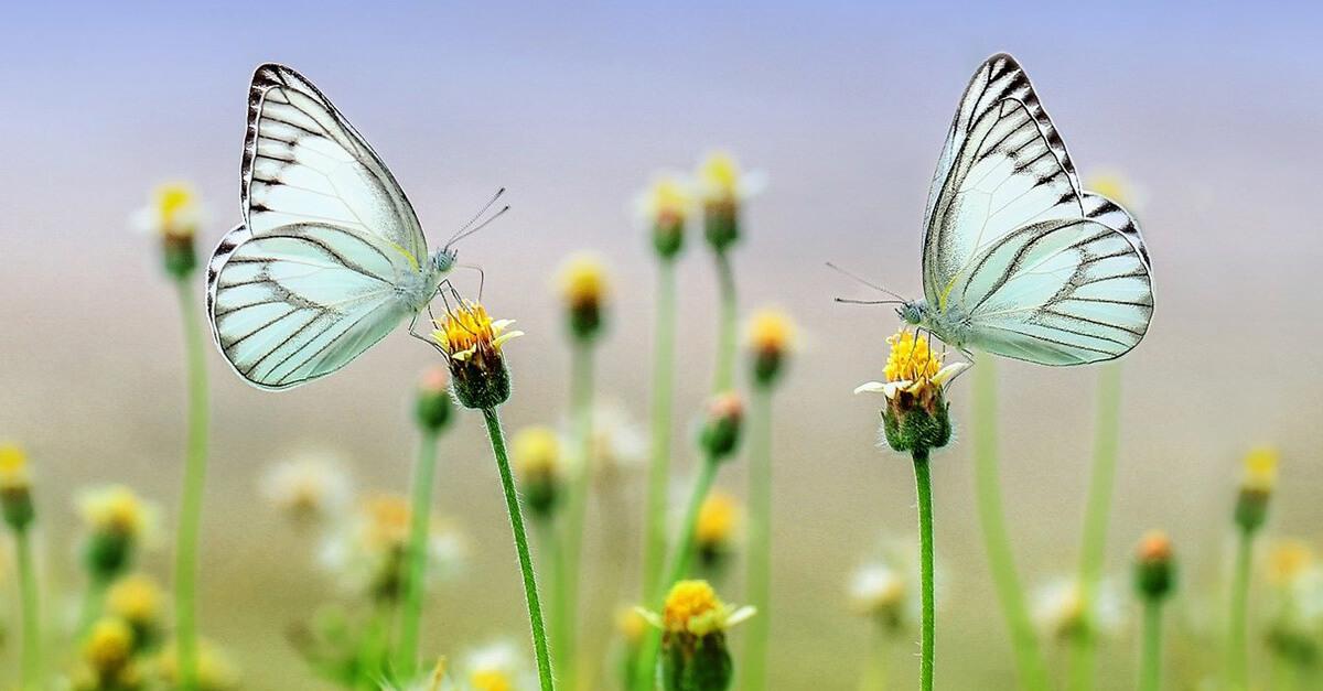 Dans 100 ans, tous les insectes pourraient avoir disparu