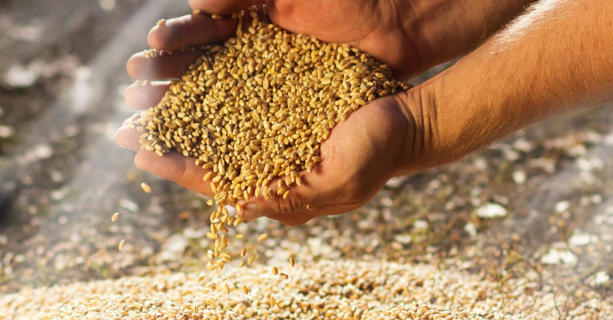 Pour sauver notre souveraineté alimentaire : luttons contre la privatisation des semences